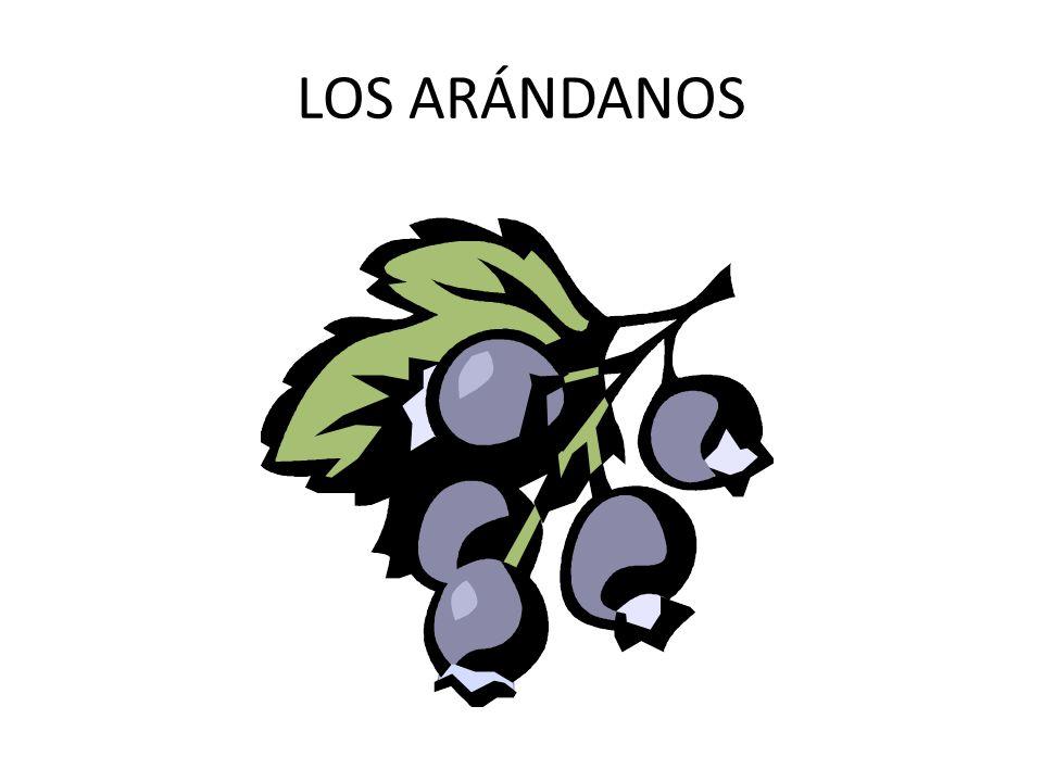 LOS ARÁNDANOS