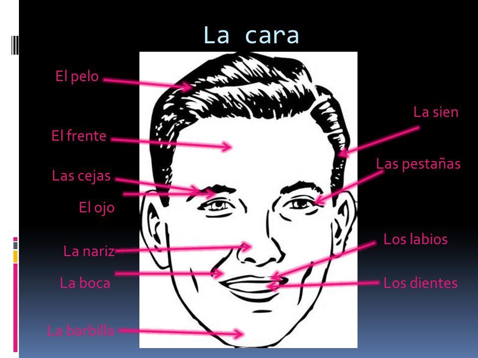 La cara El pelo El frente La sien Las pestañas Las cejas El ojo La nariz La boca Los labios Los dientes La barbilla