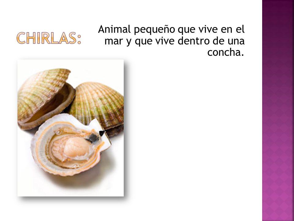 Animal pequeño que vive en el mar y que vive dentro de una concha.