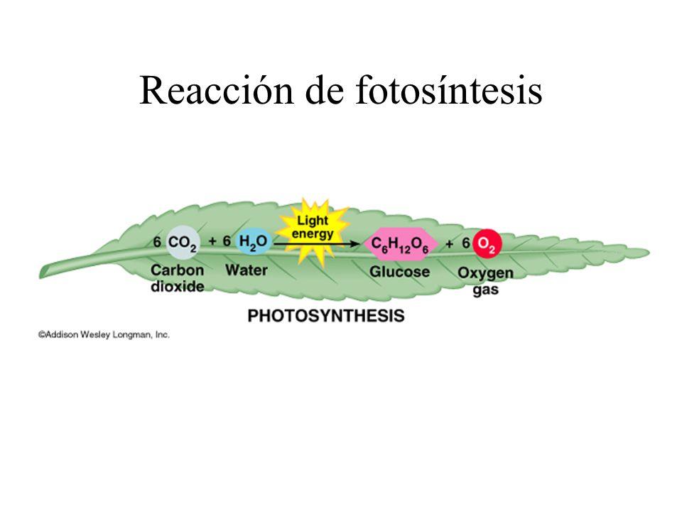 Reacción de fotosíntesis