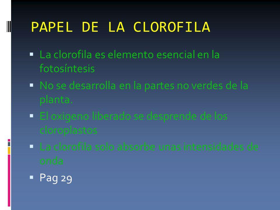 PAPEL DE LA CLOROFILA  La clorofila es elemento esencial en la fotosíntesis  No se desarrolla en la partes no verdes de la planta.