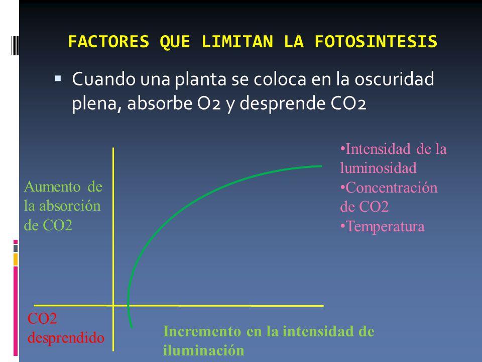 FACTORES QUE LIMITAN LA FOTOSINTESIS  Cuando una planta se coloca en la oscuridad plena, absorbe O2 y desprende CO2 CO2 desprendido Aumento de la absorción de CO2 Incremento en la intensidad de iluminación Intensidad de la luminosidad Concentración de CO2 Temperatura