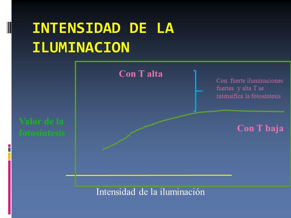 INTENSIDAD DE LA ILUMINACION Intensidad de la iluminación Valor de la fotosíntesis Con T baja Con T alta Con fuerte iluminaciones fuertes y alta T se intensifica la fotosíntesis