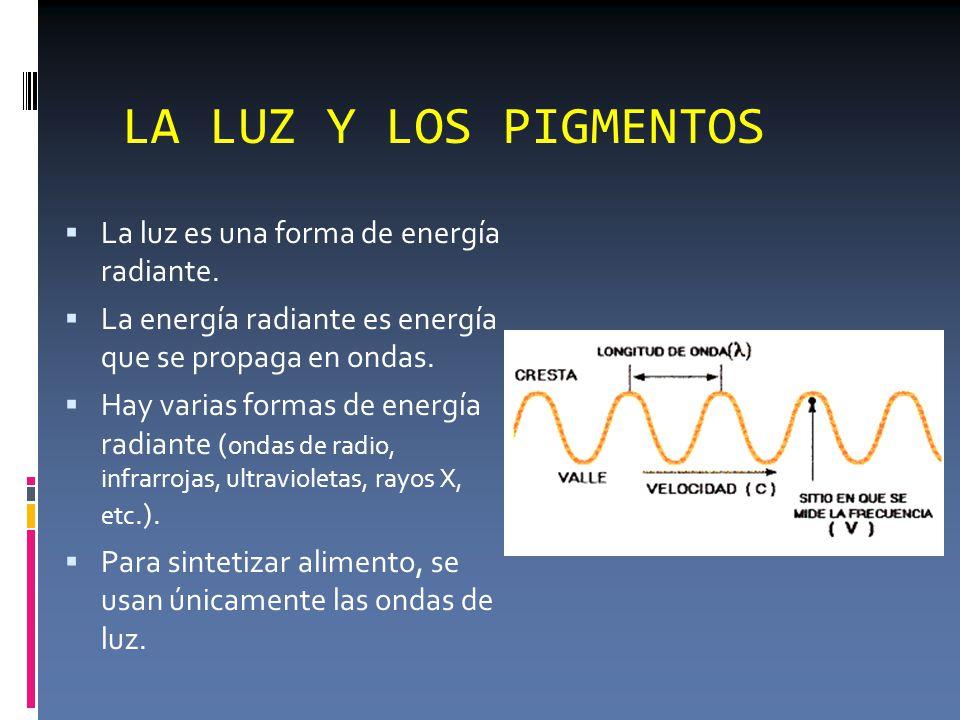 LA LUZ Y LOS PIGMENTOS  La luz es una forma de energía radiante.