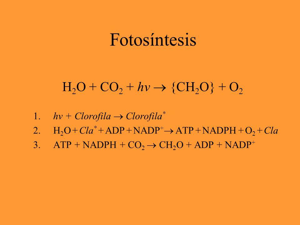 8 fotones + H 2 O + CO 2  {CH 2 O} + O 2 intermedios: 2 NADPH y 3 ATP