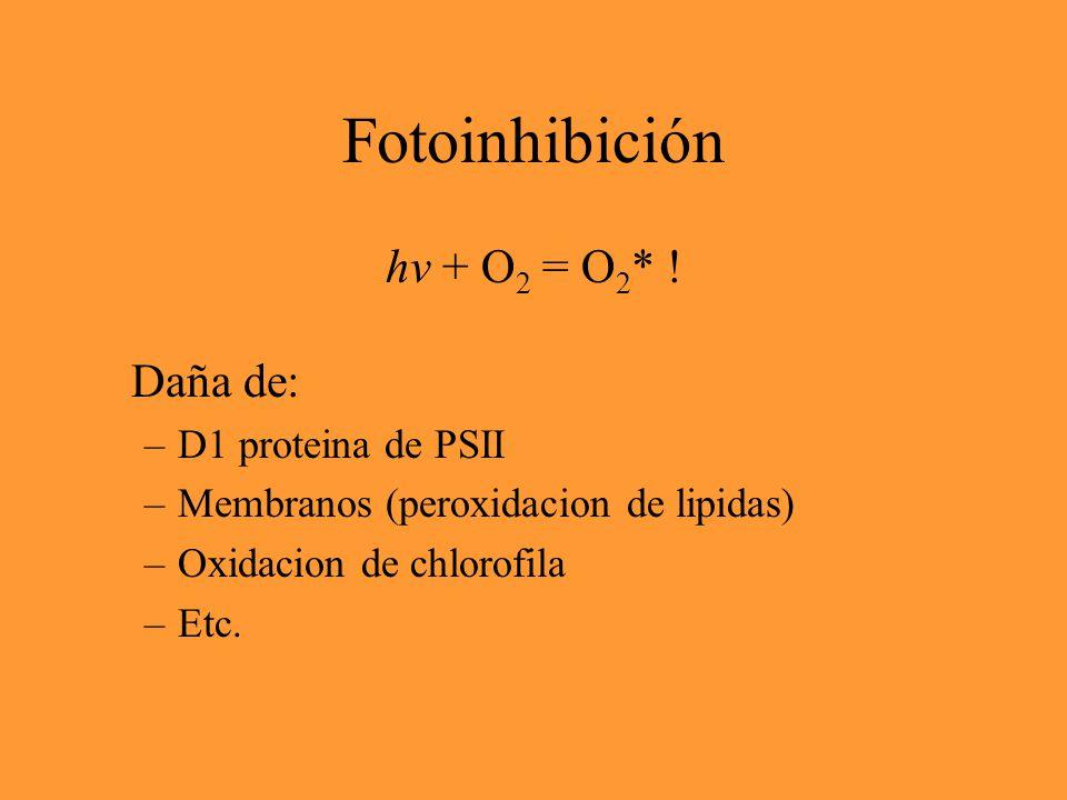 Fotosíntesis H 2 O + CO 2 + hv  {CH 2 O} + O 2