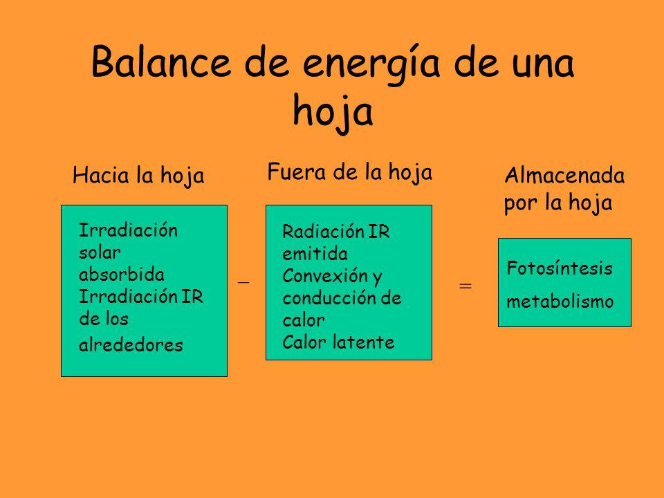 Balance de energía de una hoja Irradiación solar absorbida Irradiación IR de los alrededores Radiación IR emitida Convexión y conducción de calor Calor latente Hacia la hoja Fuera de la hoja =