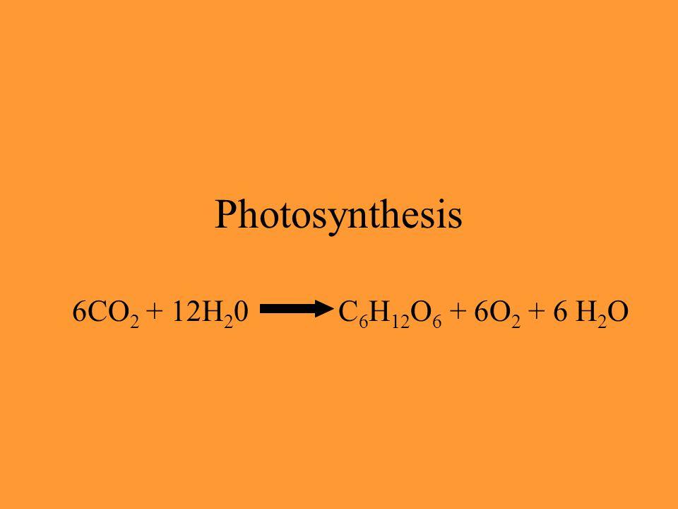 ECUACIÓN GLOBAL nH 2 O + nCO 2 nO 2 + (CH 2 O)n luz FOTOSÍNTESIS OXIGÉNICA (CH 2 O)n = fotoasimilados GLUCOSA SACAROSA FRUCTUOSA ALMIDÓN