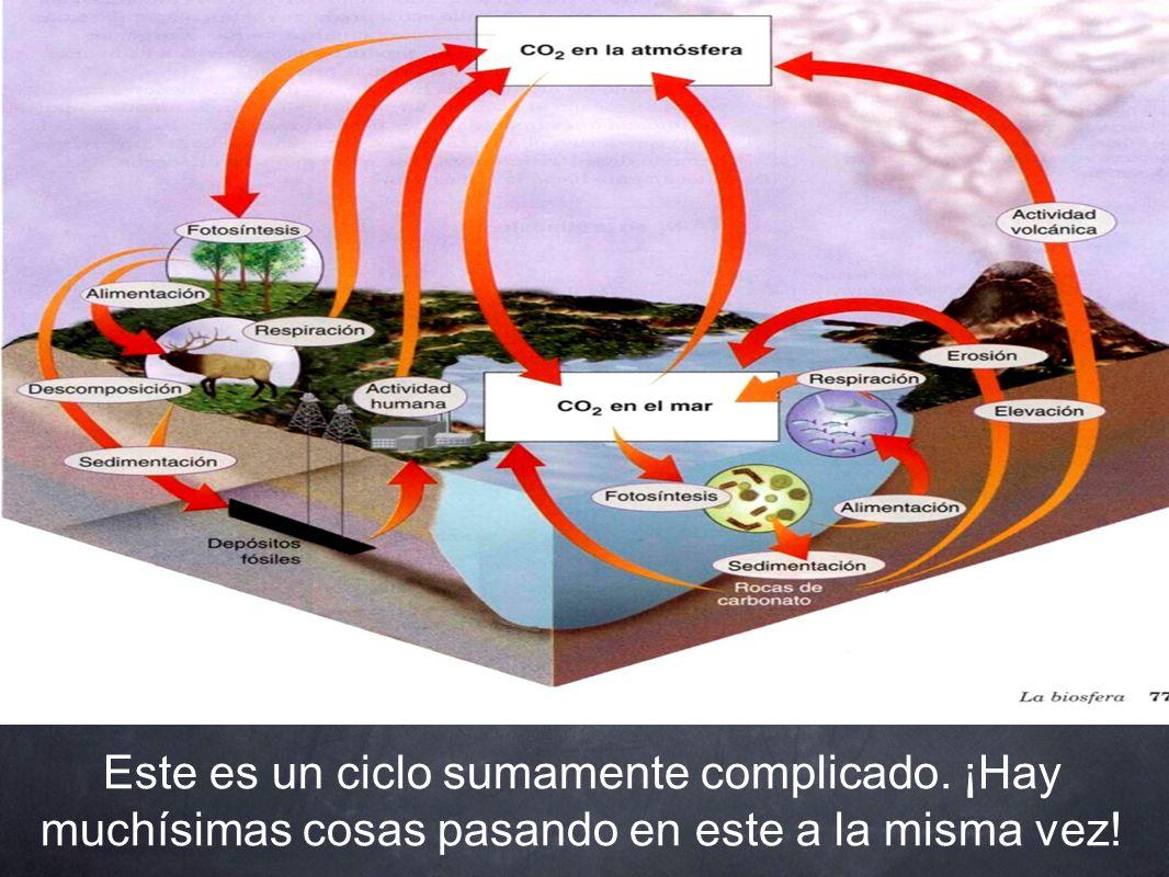 Vamos a mirar más de cerca el ciclo global del carbono, elemento que es parte central de la ciencia del cambio climático.
