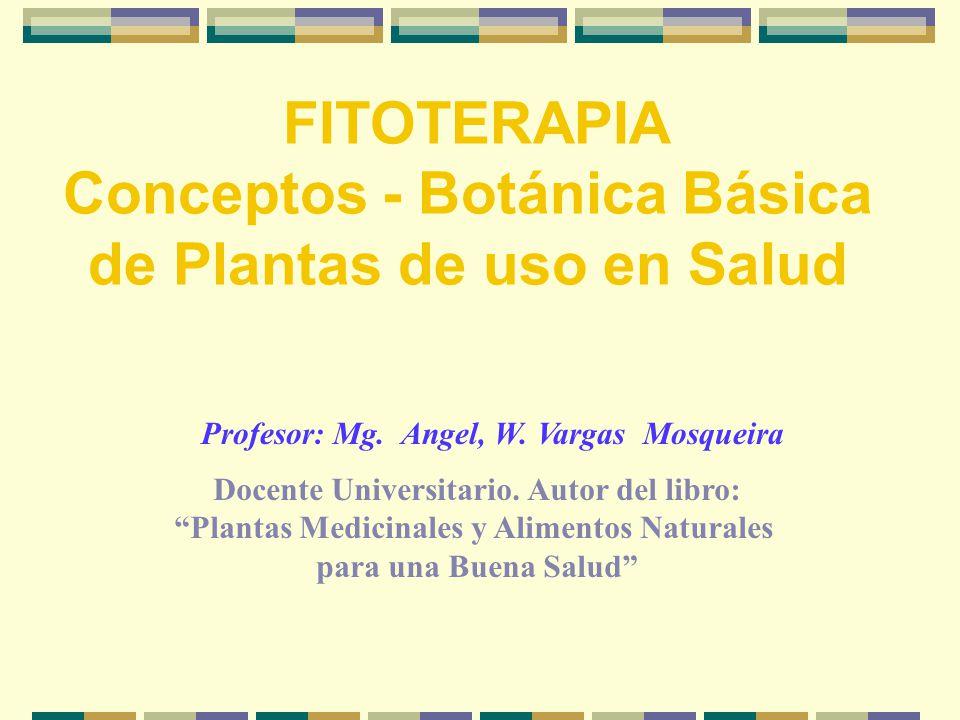 FITOTERAPIA Conceptos - Botánica Básica de Plantas de uso en Salud Profesor: Mg.