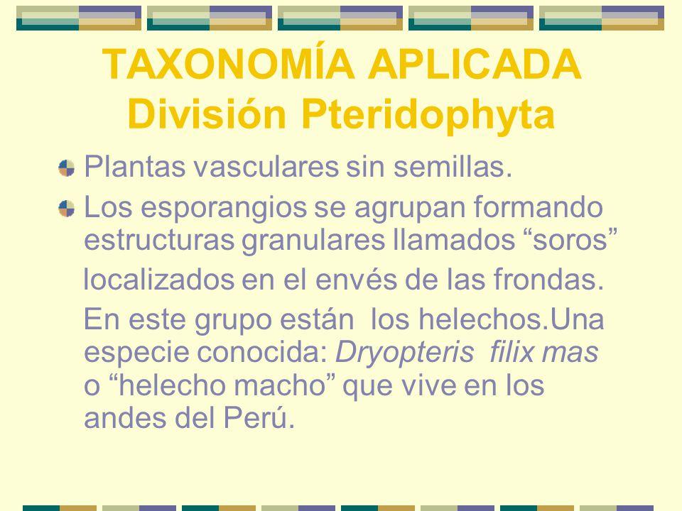 TAXONOMÍA APLICADA División Pteridophyta Plantas vasculares sin semillas.