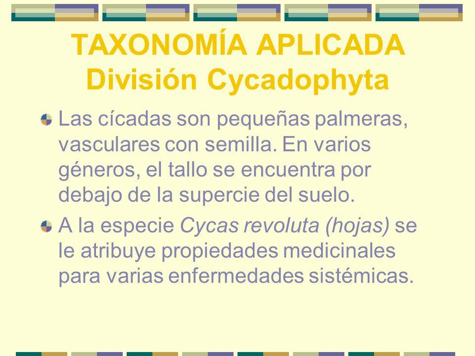 TAXONOMÍA APLICADA División Cycadophyta Las cícadas son pequeñas palmeras, vasculares con semilla.