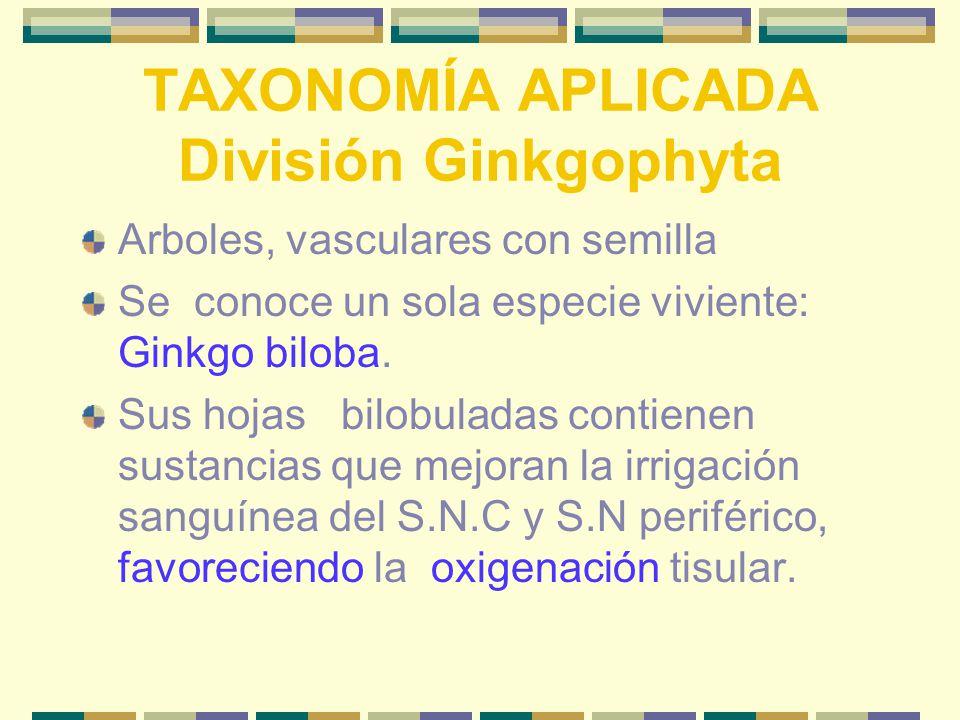TAXONOMÍA APLICADA División Ginkgophyta Arboles, vasculares con semilla Se conoce un sola especie viviente: Ginkgo biloba.