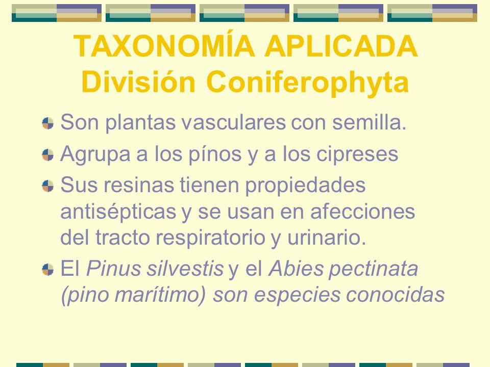 TAXONOMÍA APLICADA División Coniferophyta Son plantas vasculares con semilla.