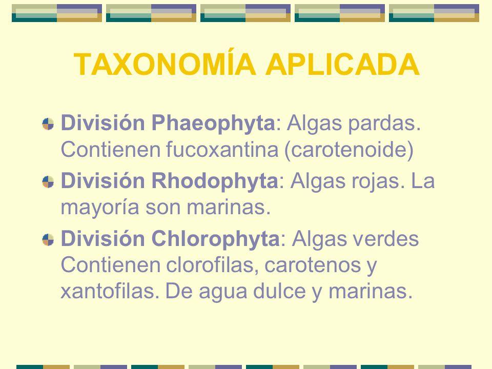 TAXONOMÍA APLICADA División Phaeophyta: Algas pardas.