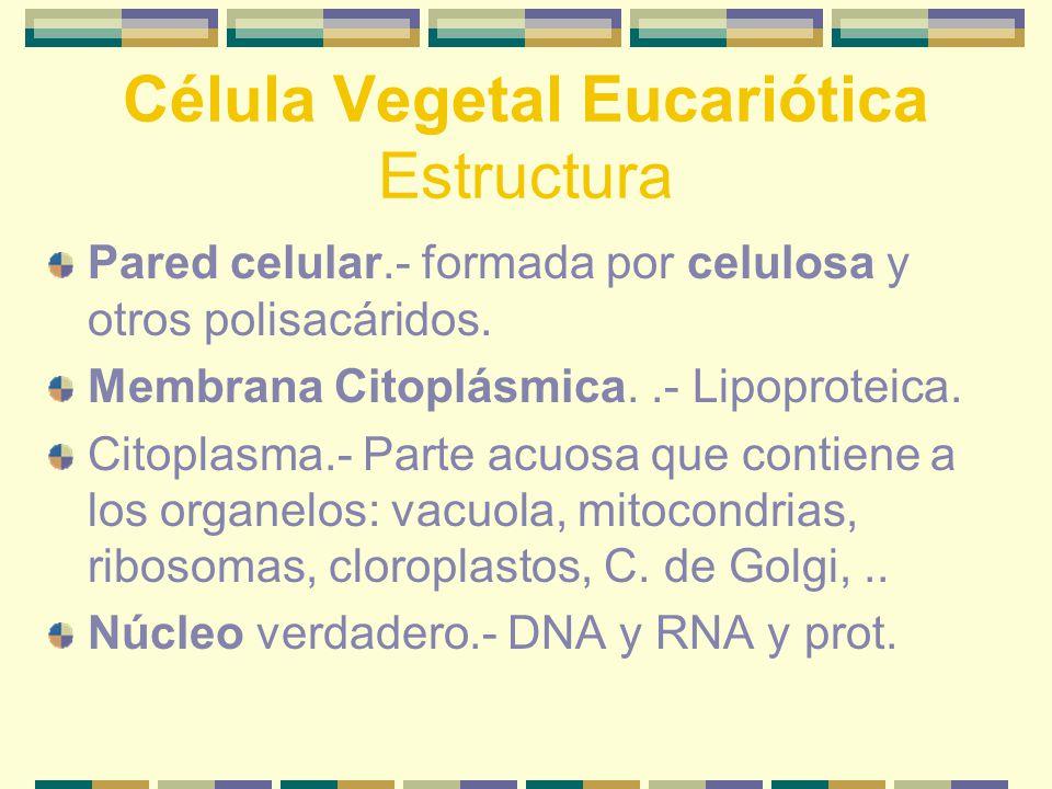 Célula Vegetal Eucariótica Estructura Pared celular.- formada por celulosa y otros polisacáridos.