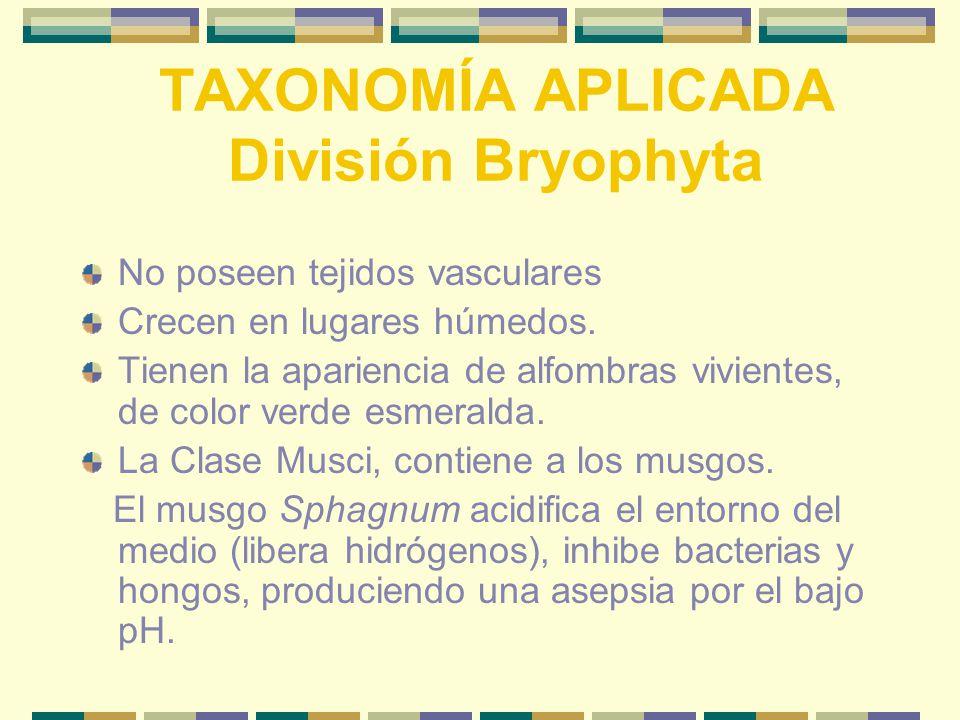 TAXONOMÍA APLICADA División Bryophyta No poseen tejidos vasculares Crecen en lugares húmedos.