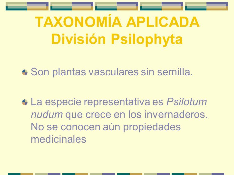 TAXONOMÍA APLICADA División Psilophyta Son plantas vasculares sin semilla.