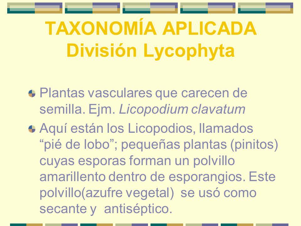 TAXONOMÍA APLICADA División Lycophyta Plantas vasculares que carecen de semilla.