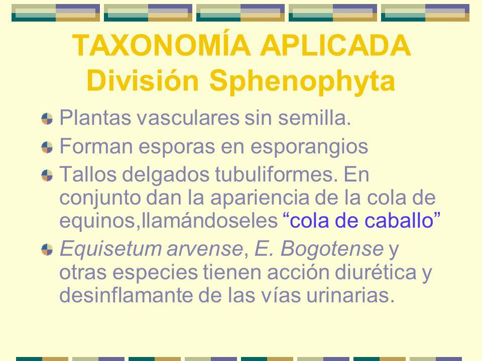 TAXONOMÍA APLICADA División Sphenophyta Plantas vasculares sin semilla.