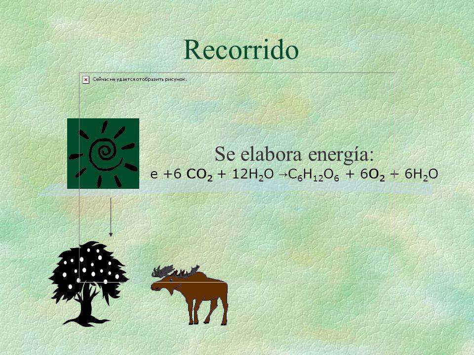 Producto a desarrollar: §Inicio, Proceso y Metabolismo de los carbohidratos como fuente de energía: fotosíntesis, alimentación y gasto de energía.