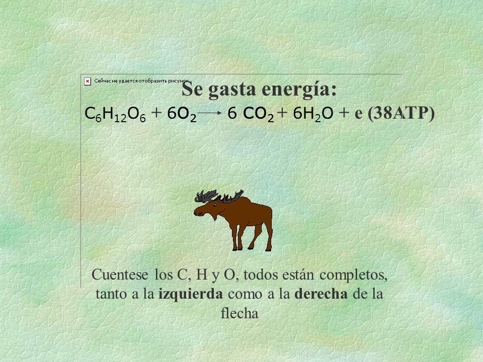 Recorrido Se elabora energía: e +6 CO 2 + 12H 2 O →C 6 H 12 O 6 + 6O 2 + 6H 2 O