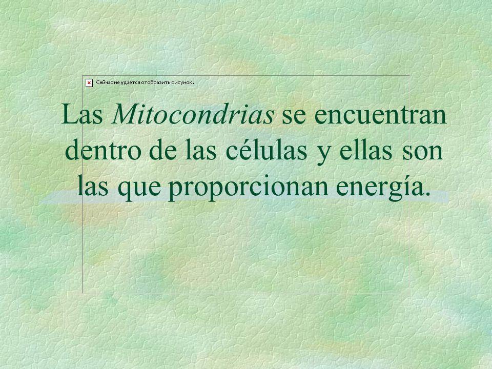 ¿Donde se queman (oxidan) los componentes para producir energía R. En las Mitocondrias :
