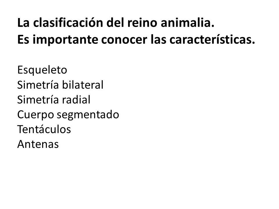 La clasificación del reino animalia. Es importante conocer las características.