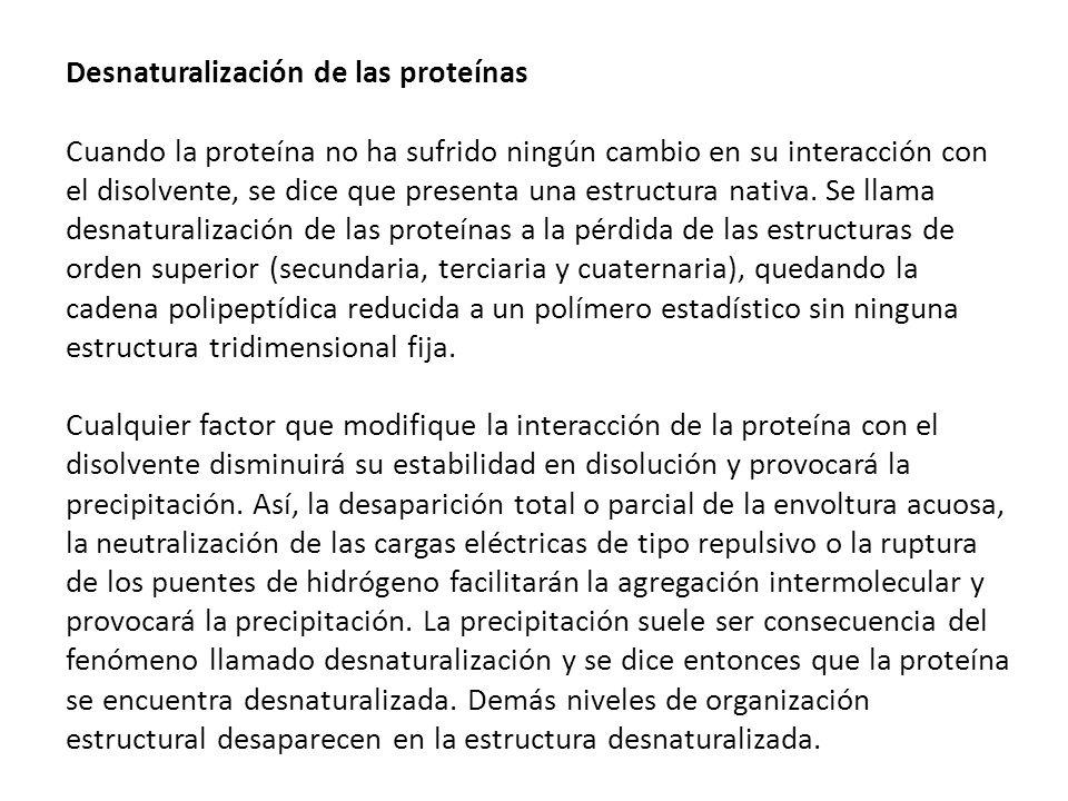 Desnaturalización de las proteínas Cuando la proteína no ha sufrido ningún cambio en su interacción con el disolvente, se dice que presenta una estructura nativa.