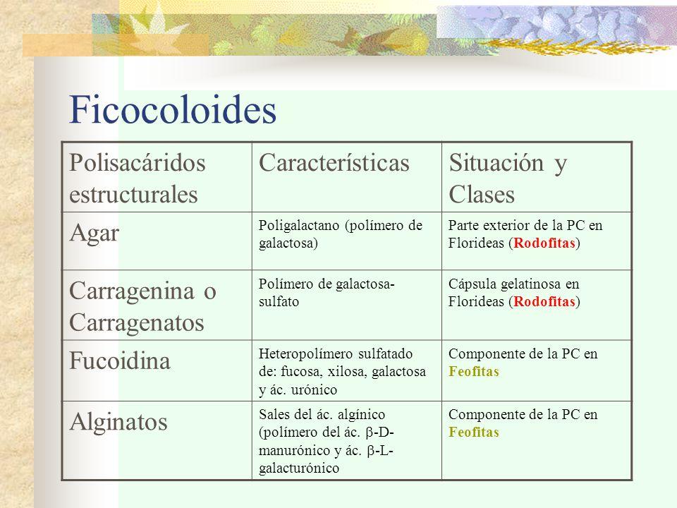 Ficocoloides Polisacáridos estructurales CaracterísticasSituación y Clases Agar Poligalactano (polímero de galactosa) Parte exterior de la PC en Florideas (Rodofitas) Carragenina o Carragenatos Polímero de galactosa- sulfato Cápsula gelatinosa en Florideas (Rodofitas) Fucoidina Heteropolímero sulfatado de: fucosa, xilosa, galactosa y ác.