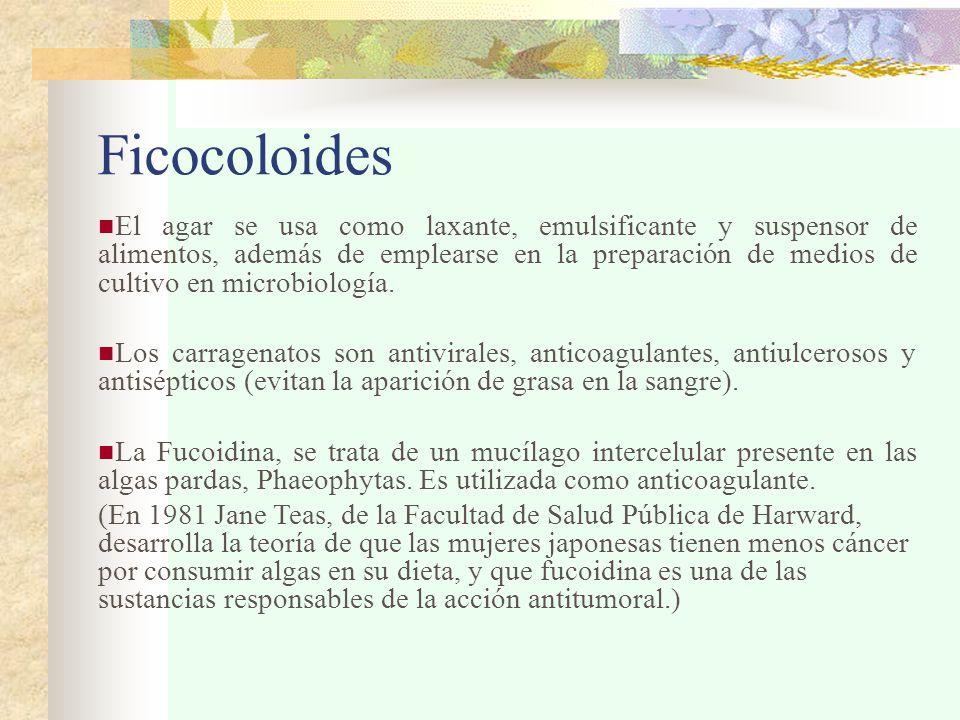 Ficocoloides El agar se usa como laxante, emulsificante y suspensor de alimentos, además de emplearse en la preparación de medios de cultivo en microbiología.