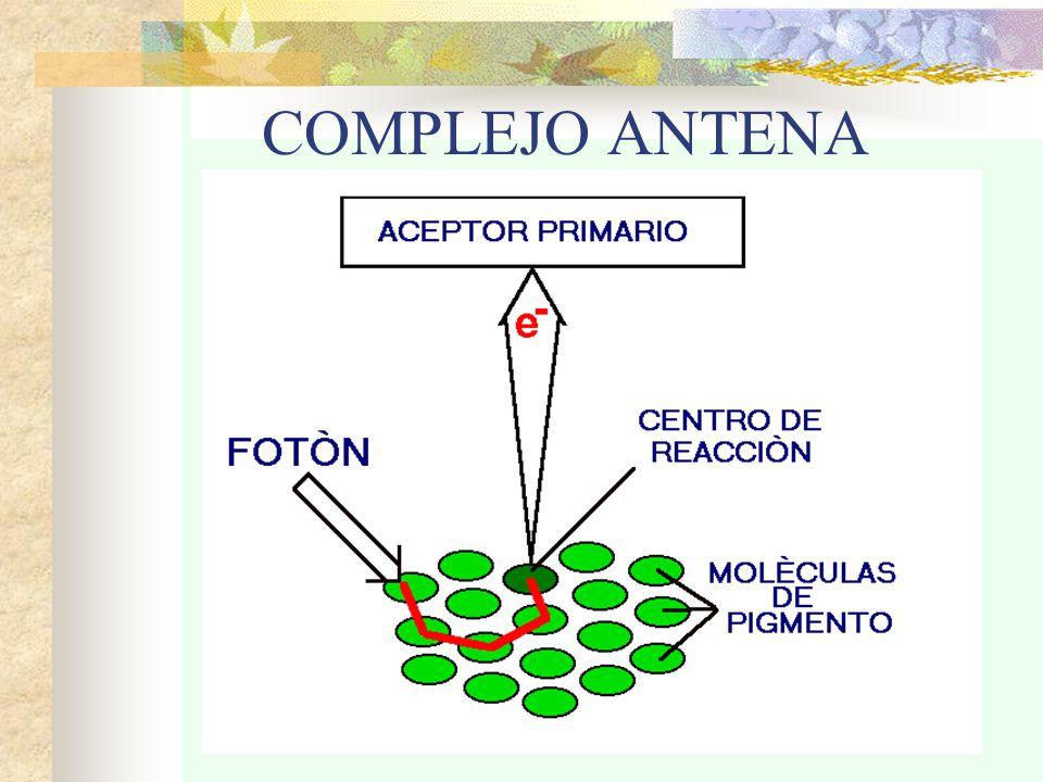 COMPLEJO ANTENA