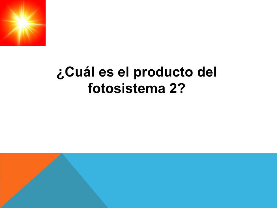 ¿Cuál es el producto del fotosistema 2