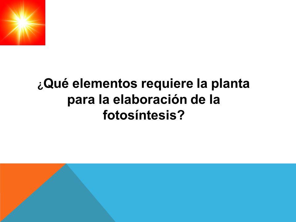 ¿ Qué elementos requiere la planta para la elaboración de la fotosíntesis