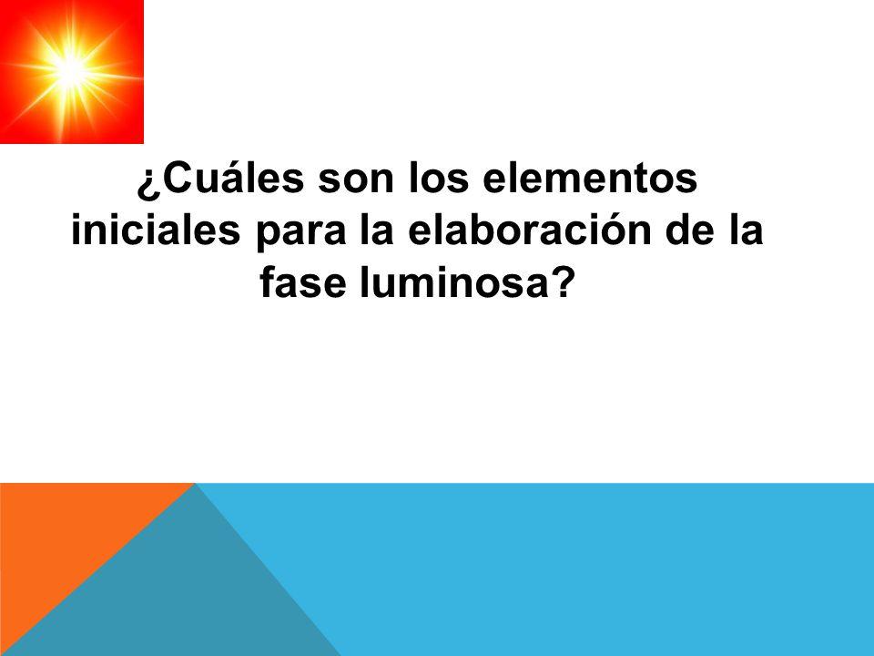 ¿Cuáles son los elementos iniciales para la elaboración de la fase luminosa