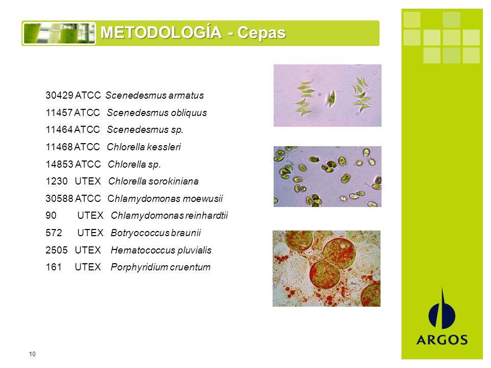 10 METODOLOGÍA - Cepas 30429 ATCC Scenedesmus armatus 11457 ATCC Scenedesmus obliquus 11464 ATCC Scenedesmus sp.