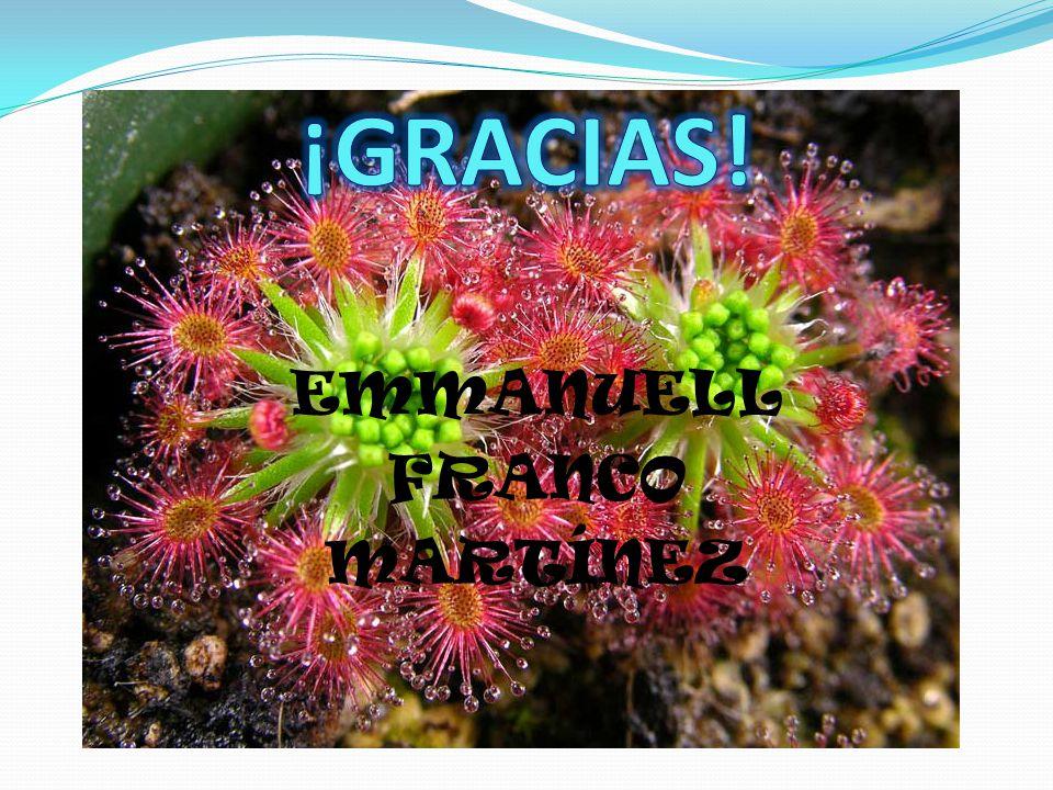 EMMANUELL FRANCO MARTÍNEZ