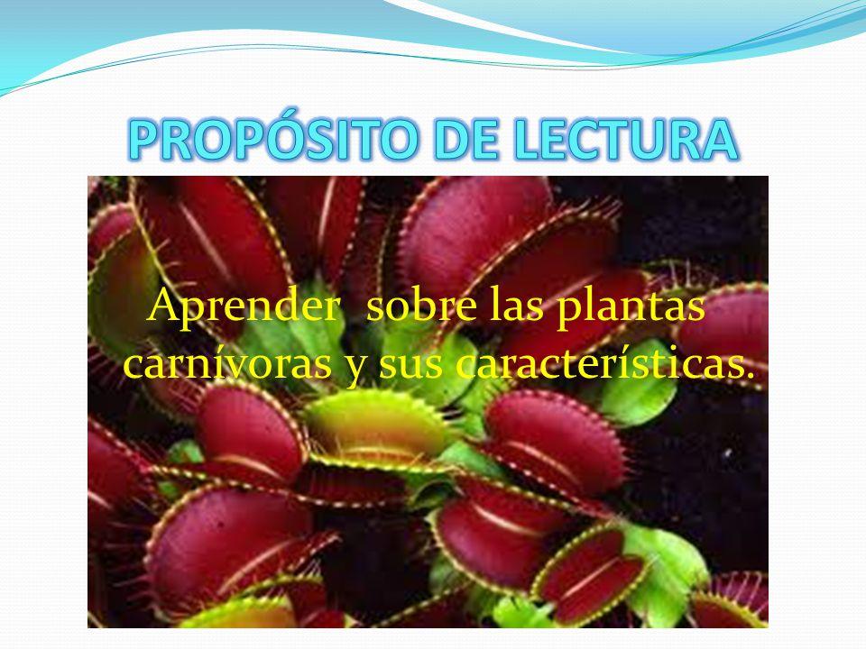 Aprender sobre las plantas carnívoras y sus características.