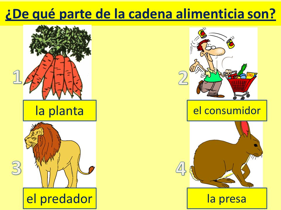 ¿De qué parte de la cadena alimenticia son la planta el consumidor el predador la presa