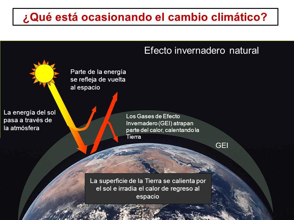 13 Curso Introducción a REDD GEI Los Gases de Efecto Invernadero (GEI) atrapan parte del calor, calentando la Tierra La superficie de la Tierra se calienta por el sol e irradia el calor de regreso al espacio Parte de la energía se refleja de vuelta al espacio Efecto invernadero natural La energía del sol pasa a través de la atmósfera ¿Qué está ocasionando el cambio climático