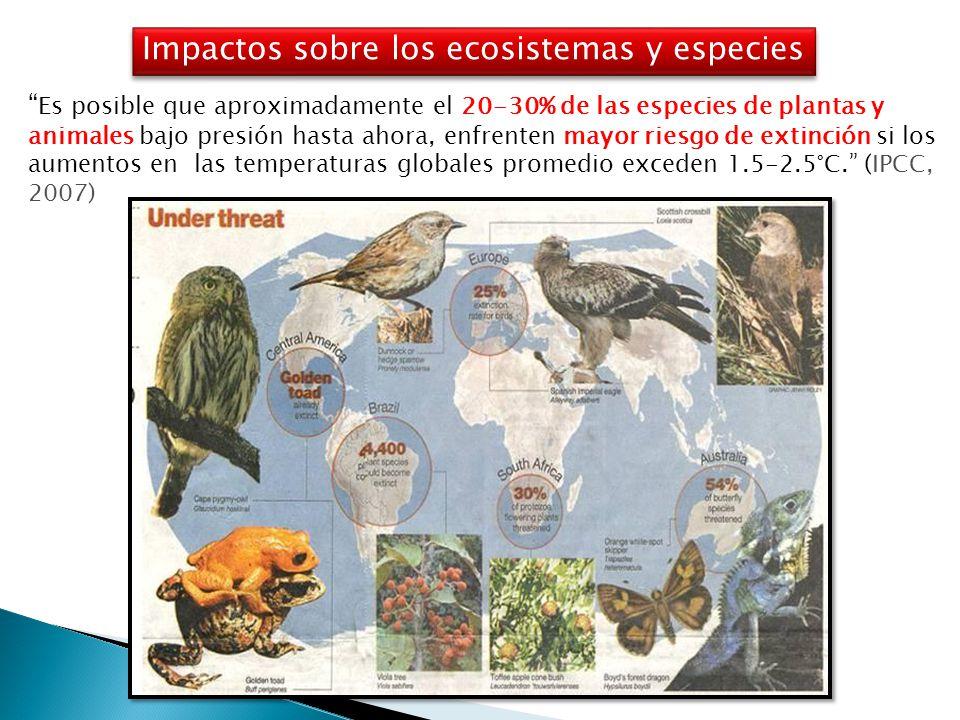 Es posible que aproximadamente el 20-30% de las especies de plantas y animales bajo presión hasta ahora, enfrenten mayor riesgo de extinción si los aumentos en las temperaturas globales promedio exceden 1.5-2.5°C. (IPCC, 2007) Public media Impactos sobre los ecosistemas y especies