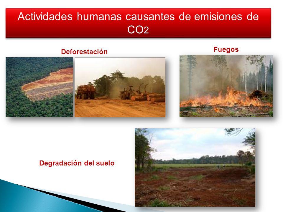 Deforestación Actividades humanas causantes de emisiones de CO 2 Fuegos Degradación del suelo