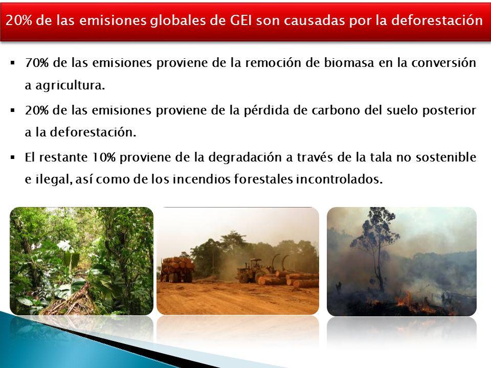 20% de las emisiones globales de GEI son causadas por la deforestación  70% de las emisiones proviene de la remoción de biomasa en la conversión a agricultura.