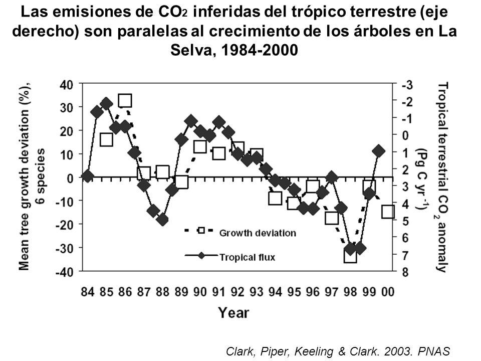 Las emisiones de CO 2 inferidas del trópico terrestre (eje derecho) son paralelas al crecimiento de los árboles en La Selva, 1984-2000 Clark, Piper, Keeling & Clark.