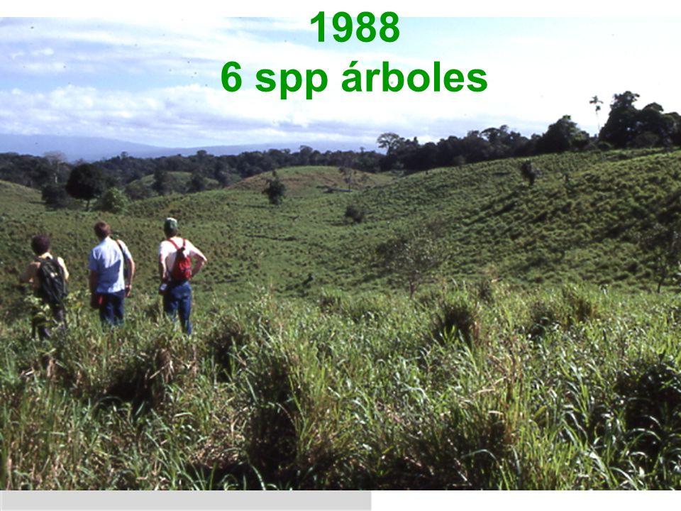1988 6 spp árboles