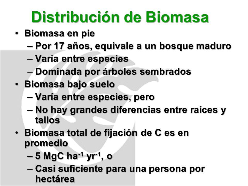 Distribución de Biomasa Biomasa en pieBiomasa en pie –Por 17 años, equivale a un bosque maduro –Varía entre especies –Dominada por árboles sembrados Biomasa bajo sueloBiomasa bajo suelo –Varía entre especies, pero –No hay grandes diferencias entre raíces y tallos Biomasa total de fijación de C es en promedioBiomasa total de fijación de C es en promedio –5 MgC ha -1 yr -1, o –Casi suficiente para una persona por hectárea