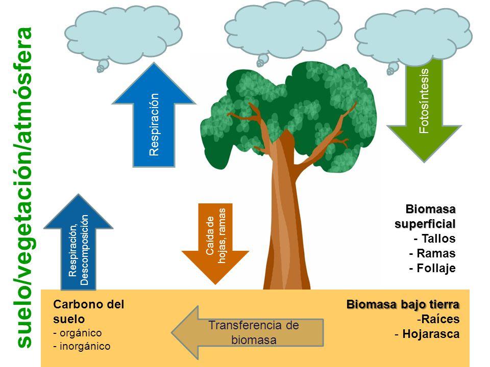 suelo/vegetación/atmósfera Carbono del suelo - orgánico - inorgánico Biomasa bajo tierra -Raíces - Hojarasca Transferencia de biomasa Respiración Fotosíntesis Respiración, Descomposición Caída de hojas, ramas Biomasa superficial - Tallos - Ramas - Follaje