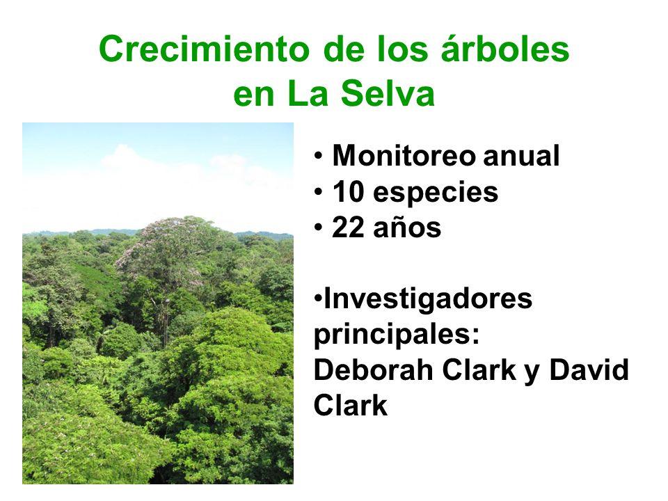 Monitoreo anual 10 especies 22 años Investigadores principales: Deborah Clark y David Clark Crecimiento de los árboles en La Selva