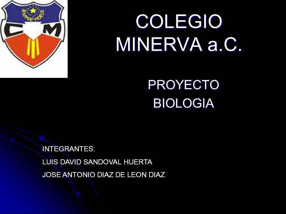COLEGIO MINERVA a.C.
