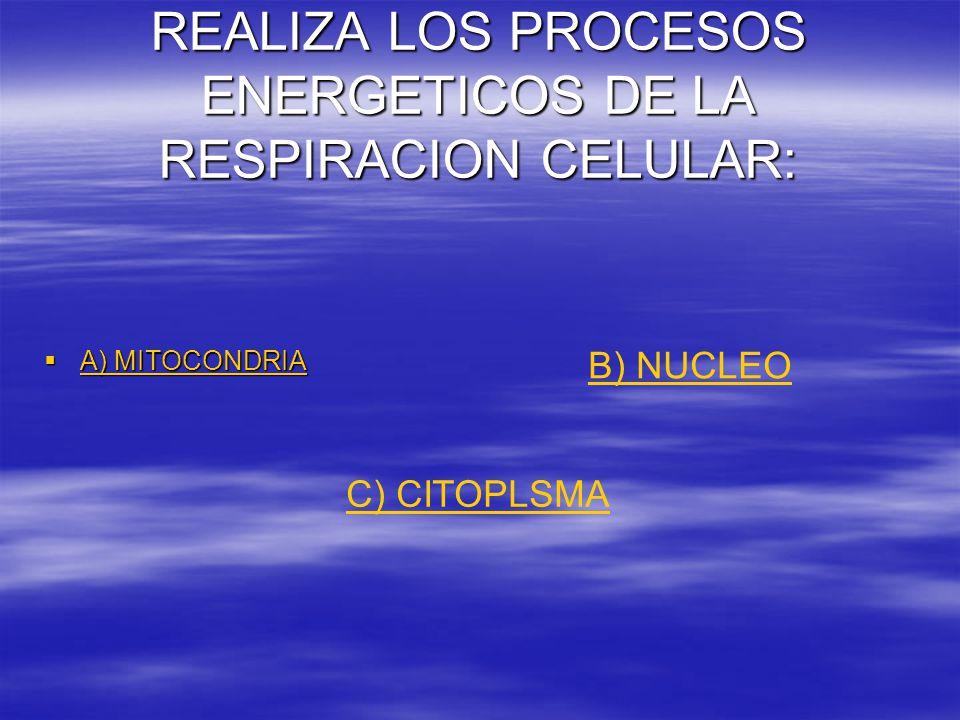 REALIZA LOS PROCESOS ENERGETICOS DE LA RESPIRACION CELULAR:  A) MITOCONDRIA A) MITOCONDRIA A) MITOCONDRIA B) NUCLEO C) CITOPLSMA